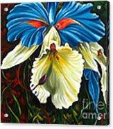 Beauty Of Blossom 2 Acrylic Print by Uma Devi