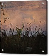 Bedding Down For Evening Acrylic Print by Lianne Schneider