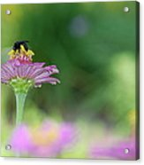 Bee Marks The Spot Acrylic Print by Kathy Gibbons