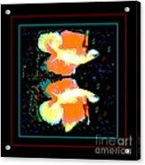 Betta Splendens X2 Acrylic Print by Renee Trenholm