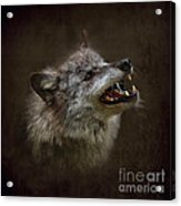 Big Bad Wolf Acrylic Print by Louise Heusinkveld