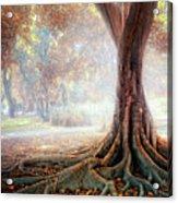 Big Tree Root Acrylic Print by Zu Sanchez Photography