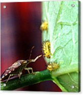 Biocontrol Of Bean Beetle Acrylic Print by Science Source