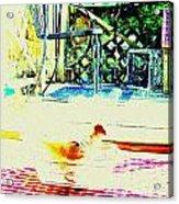 Bird Bath Acrylic Print by YoMamaBird Rhonda