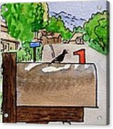 Bird On The Mailbox Sketchbook Project Down My Street Acrylic Print by Irina Sztukowski