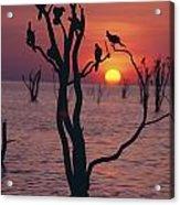 Birds On Tree, Lake Kariba At Sunset Acrylic Print by Axiom Photographic