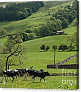 Bishopdale In The Yorkshire Dales National Park Acrylic Print by Louise Heusinkveld