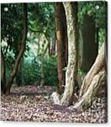 Bizarre Trees Acrylic Print by Angela Doelling AD DESIGN Photo and PhotoArt
