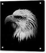 Black And White Eagle Acrylic Print by Steve McKinzie