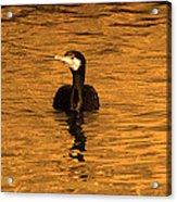 Black Bird On Surise Acrylic Print by Radoslav Nedelchev