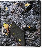 Black Rock At Graue Mill Acrylic Print by Todd Sherlock