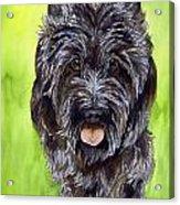 Black Scottish Terrier Acrylic Print by Cherilynn Wood