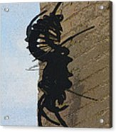 Black Widow Spider Art Acrylic Print by Karon Melillo DeVega