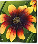 Blanket Flower Acrylic Print by Trister Hosang