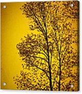 Blazing Sunset Acrylic Print by Cheryl Davis