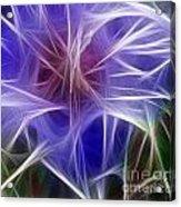 Blue Hibiscus Fractal Panel 5 Acrylic Print by Peter Piatt