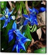 Blue Manipulation Acrylic Print by David Lane