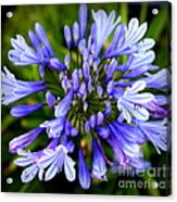 Blue On Blue Acrylic Print by Karen Wiles