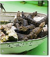Boat Full Of Alligators  Acrylic Print by Garry Gay