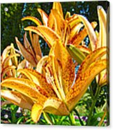 Bold Colorful Orange Lily Flowers Garden Acrylic Print by Baslee Troutman