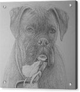 Boxer Buddy Acrylic Print by Rick Yanke