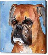 Boxer Acrylic Print by Cherilynn Wood