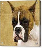 Boxer Acrylic Print by Rebecca Cozart