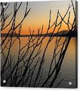 Branches In The Sunset Acrylic Print by Joana Kruse