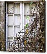 Branchy Window Acrylic Print by Carlos Caetano