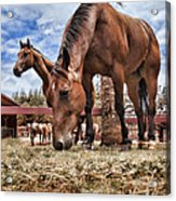 Break Time Acrylic Print by Kelley King