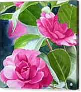 Bright Rose-colored Camellias Acrylic Print by Sharon Freeman