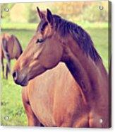 Brown Horse Acrylic Print by Euge de la Peña