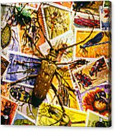 Bugs On Postage Stamps Acrylic Print by Garry Gay