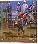 Bull Rider 1 Acrylic Print by Sean Griffin