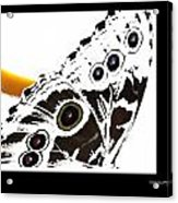 Butterfly Dream Acrylic Print by Xoanxo Cespon