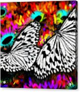 Butterfly Acrylic Print by Ilias Athanasopoulos