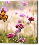 Butterfly - Monarach - The Sweet Life Acrylic Print by Mike Savad