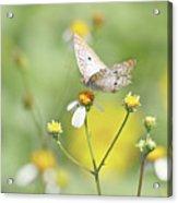 Butterfly On Wildflower Acrylic Print by Kim Hojnacki