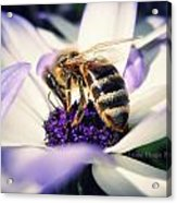 Buzz Wee Bees Acrylic Print by Lessie Heape