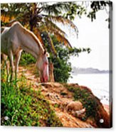 Caballo Blanco Acrylic Print by Skip Hunt