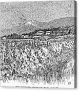 California: Vineyard, 1889 Acrylic Print by Granger