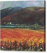 Calistoga Vineyard In Napa Valley By Deirdre Shibano Acrylic Print by Deirdre Shibano
