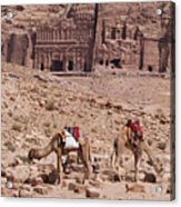 Camels In Front Of The Royal Tombs Petra Acrylic Print by Martin Child