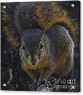 Can I Eat The Camera Acrylic Print by Heiko Koehrer-Wagner