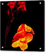 Canna Lilies On Black Acrylic Print by Mother Nature