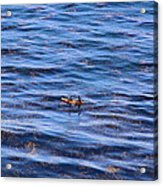 Canoeing Acrylic Print by Viktor Savchenko
