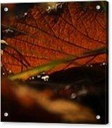 Canopy Acrylic Print by Odd Jeppesen