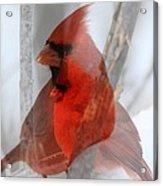 Cardinal Collage Acrylic Print by Rick Rauzi