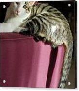Cat On Sofa Acrylic Print by Sami Sarkis