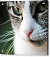 Cat Portrait Acrylic Print by Julia Williams